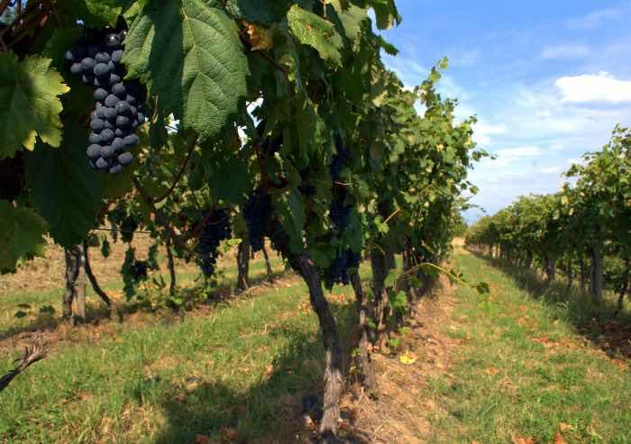 In arrivo 28,8 milioni di euro per i giovani agricoltori dell'Emilia-Romagna
