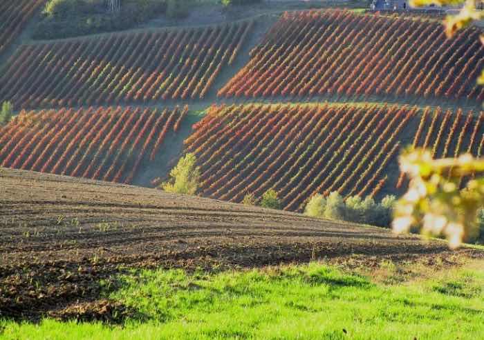 Il Lambrusco Grasparossa di Castelvetro, eccellenza di un territorio