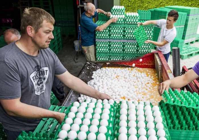 Regione ER, uova contaminate: il sistema dei controlli funziona