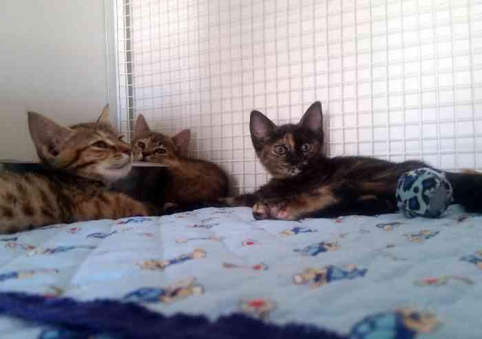 La carica dei 2.500 gatti modenesi