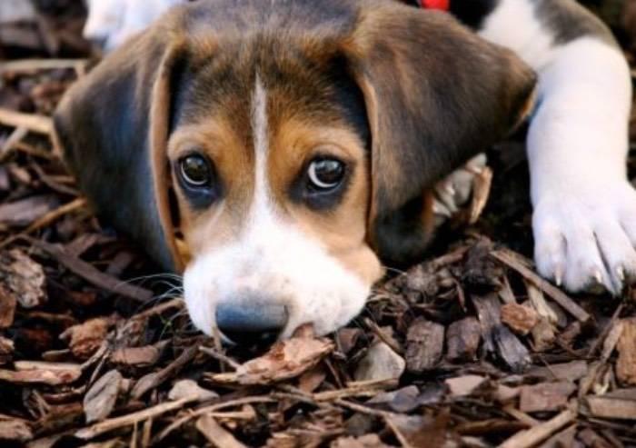 Concessi 2 giorni di permesso retribuito per curare il cane