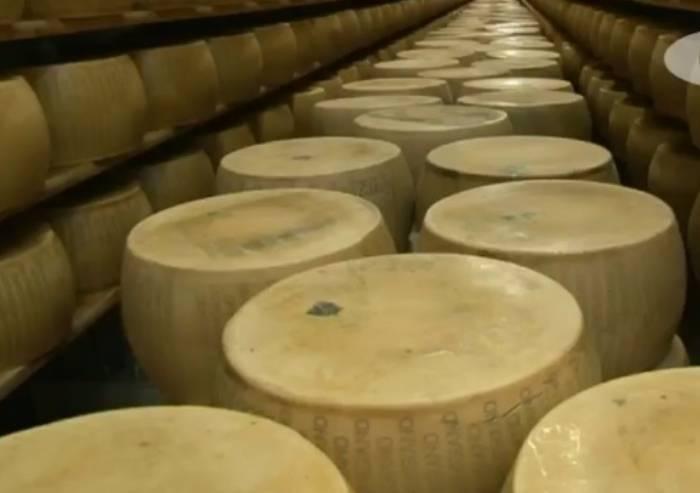 Caseificio a Pavullo, razziate 100 forme di Parmigiano