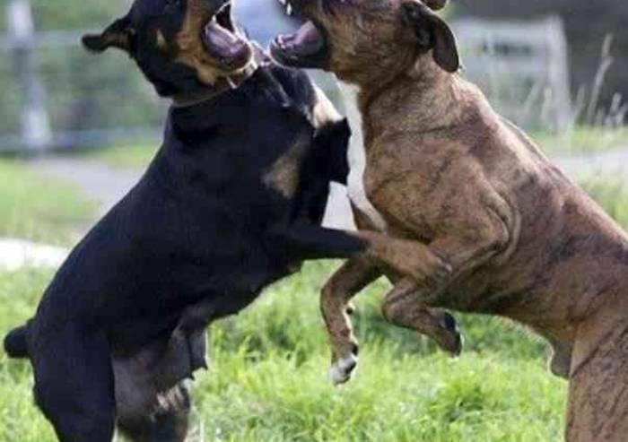 Cani sbranati da cani, nuovi casi senza risposta