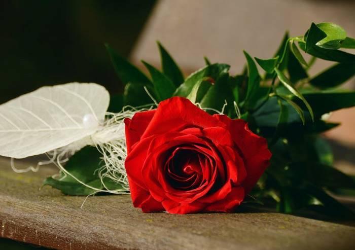 SOS fioristi modenesi. Produrre rose in Italia costa troppo