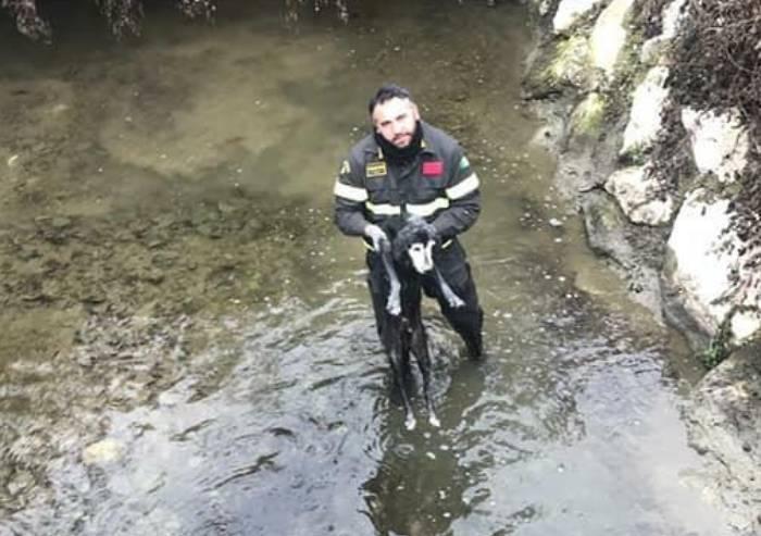 Sassuolo, cane cade nel torrente: salvato dai vigili del fuoco