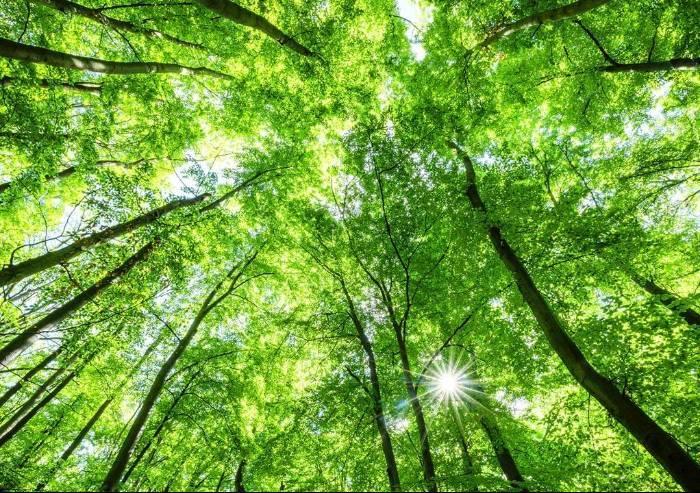 Come coniugare il risparmio in bolletta con il rispetto per l'ambiente