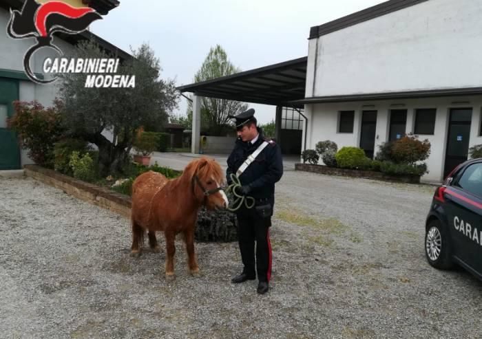 Rovereto, pony scappa all'alba: recuperato dai carabinieri