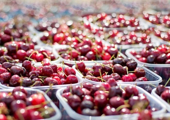 Coldiretti, maltempo: perso il 90per cento delle ciliegie