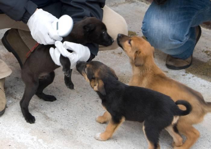 'Cliniche veterinarie a Modena, servono controlli a tappeto'
