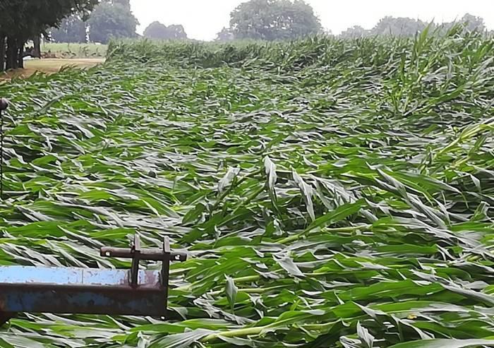 Coldiretti: 'Ecco i campi devastati dalla grandine'