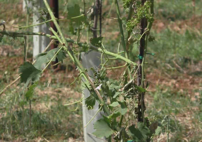 Agricoltura, apocalisse nei campi e danni alle strutture