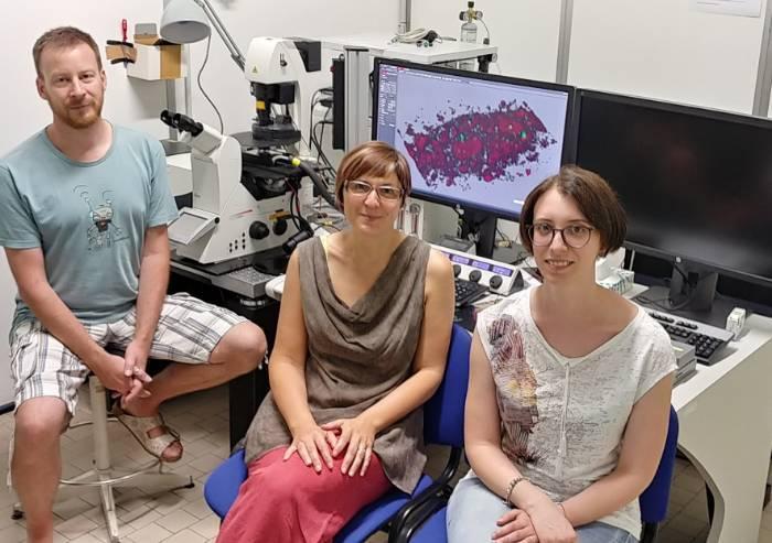 Modena i ricercatori dell'Università aprono breccia per cura Alzheimer