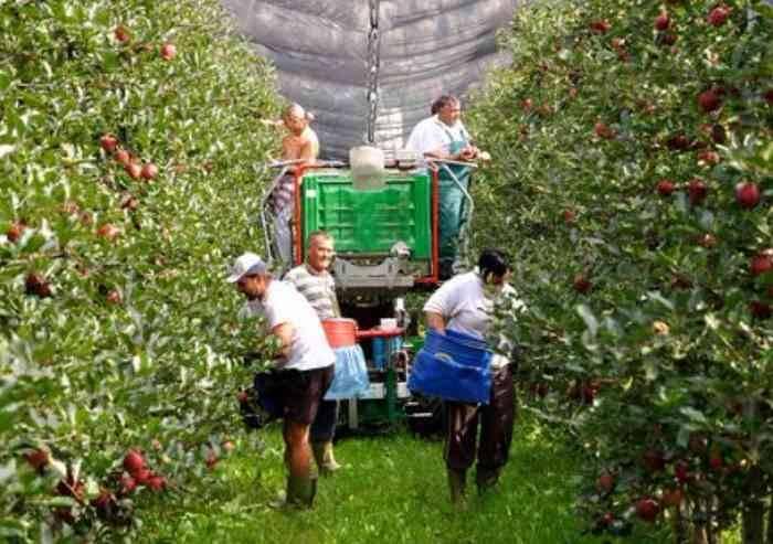 Deflazione nei campi, 3 kg di frutta venduta valgono un caffè