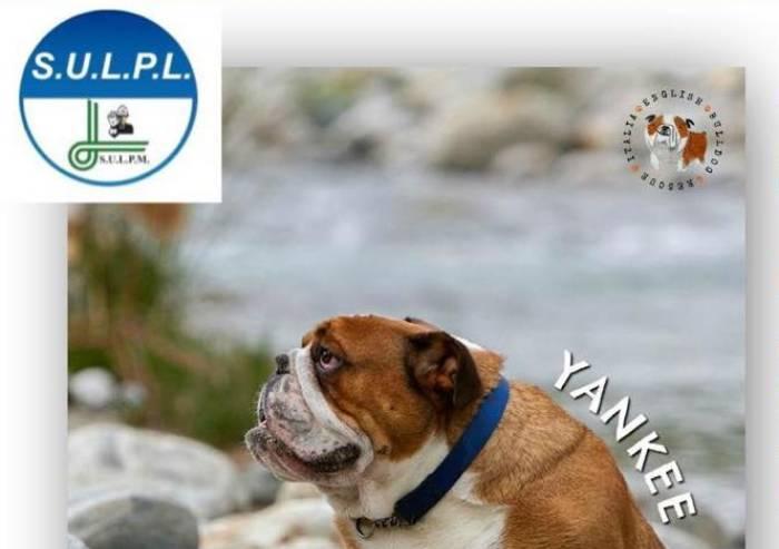 Dal Sulpl una campagna contro gli abbandoni degli animali