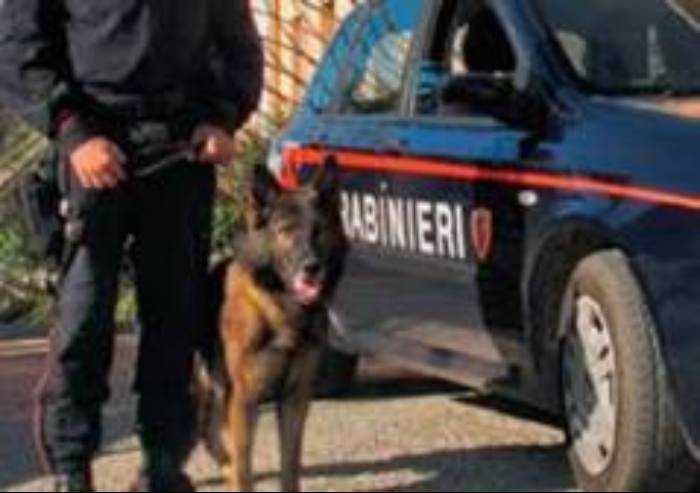Modena, in aumento i reati per droga, al Novi Sad altri due fermati