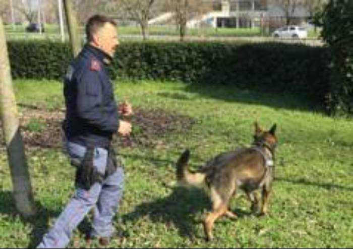 Spaccio droga: un arresto e tre denunce nel fine settimana a Modena