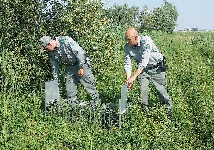 Modena, in un anno i cacciatori hanno ucciso 9mila nutrie