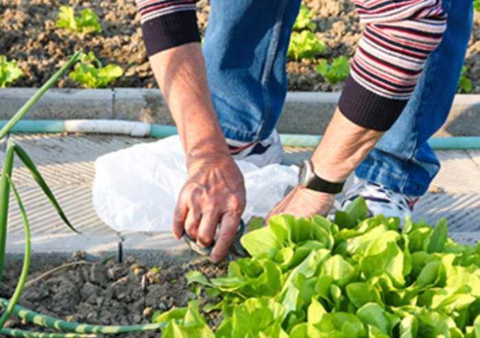 Coronavirus: è possibile recarsi in orti coltivati per autoconsumo