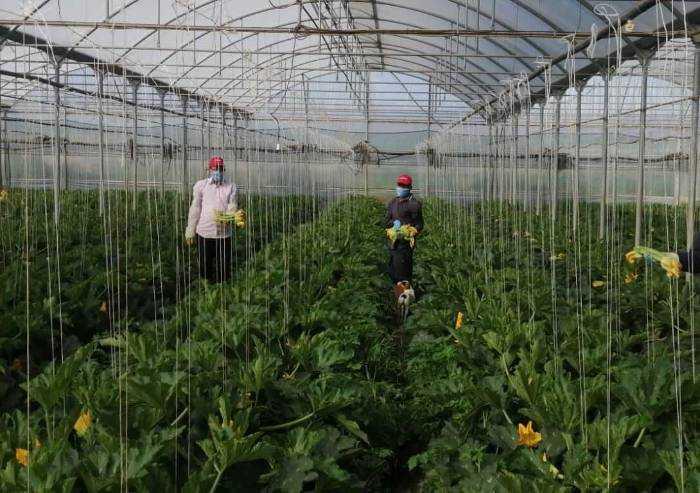L'agricoltura ai tempi del Covid-19