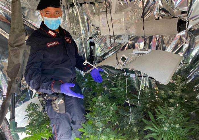 Formigine: serra di Marijuana in casa, denunciato 38enne