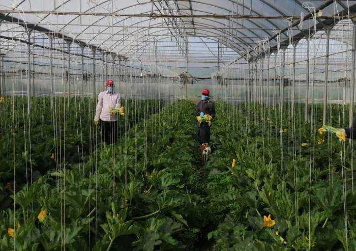 'Aumento frutta e verdura: gli agricoltori sono l'anello debole'