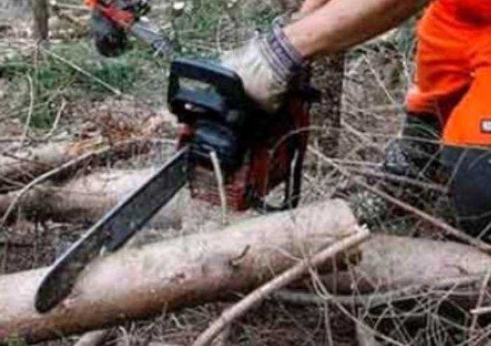 Taglia abusivamente un ettaro di bosco pubblico: denunciato