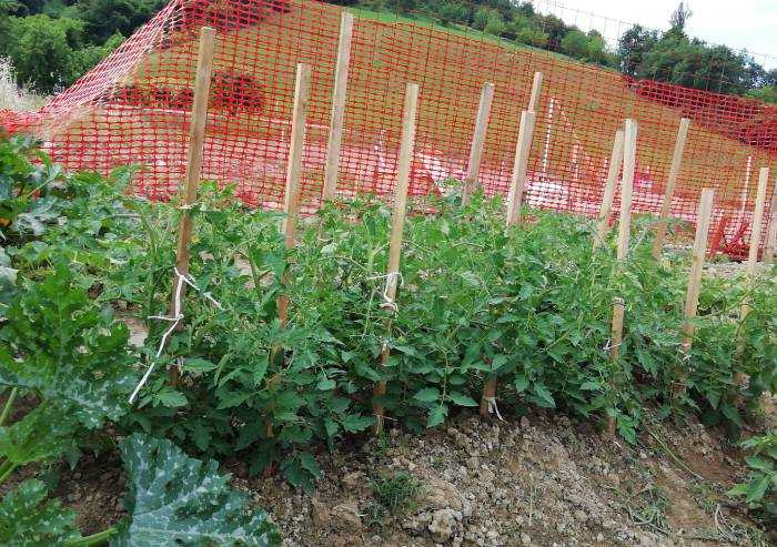 Cantiere 'green': un angolo ortofrutticolo tra cemento e gru edili
