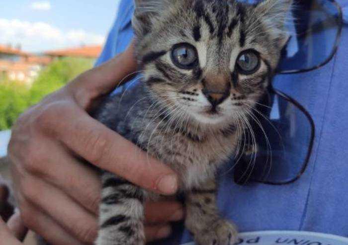 Vignola, polizia locale salva gattino prigioniero in un capannone