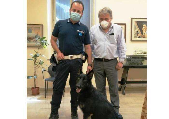 Terre di Castelli: ecco Fait, il cane antidroga della polizia locale