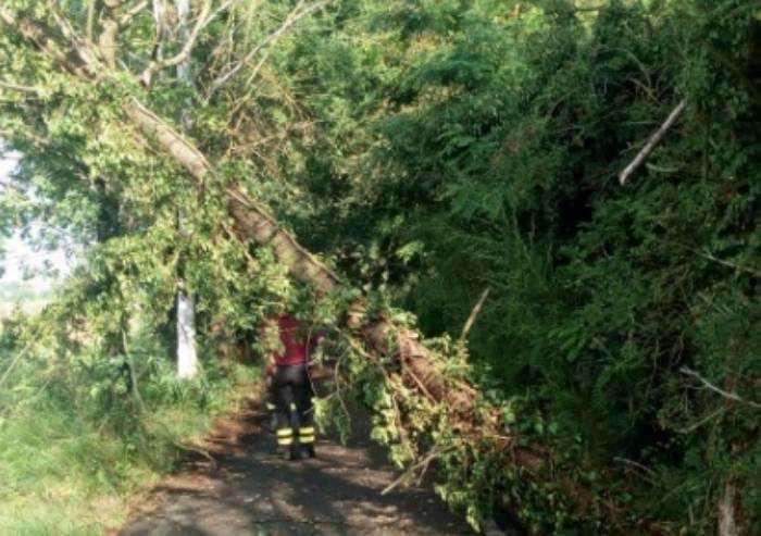 Decine di alberi abbattuti in provincia e ora torna la grandine