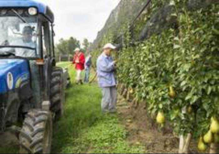 Agricoltura: in ripresa pere e mele ma il settore perde ettari