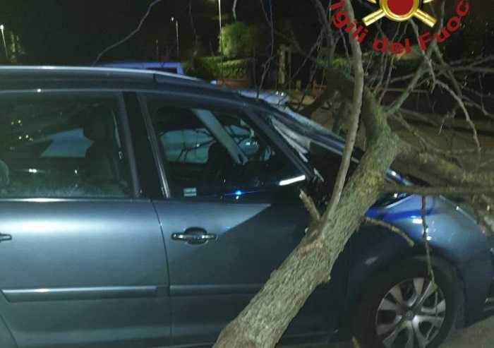 Castelfranco, albero si abbatte su due auto in sosta