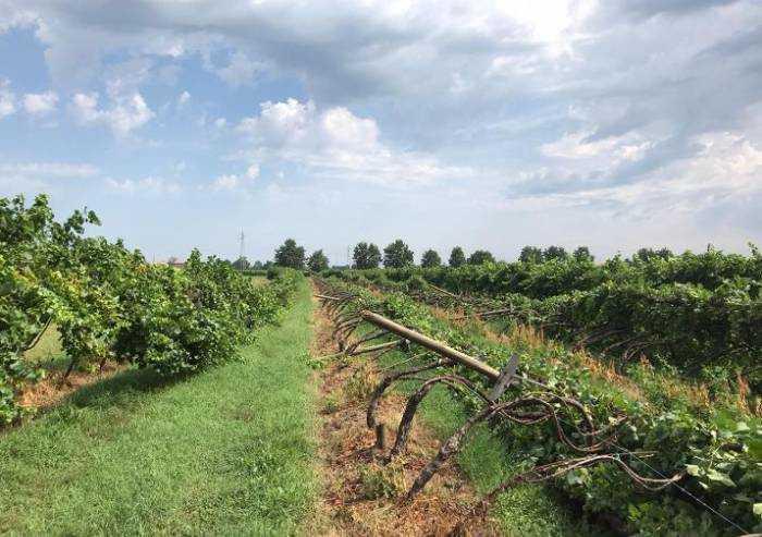 Sos Coldiretti Modena: 'Dopo il temporale strage di frutta'