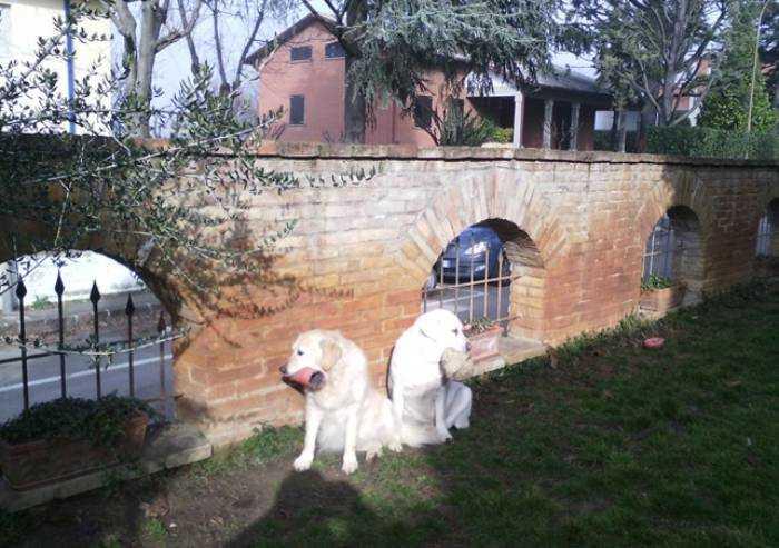 'Castelvetro, i miei cani avvelenati e uccisi nel cortile di casa'