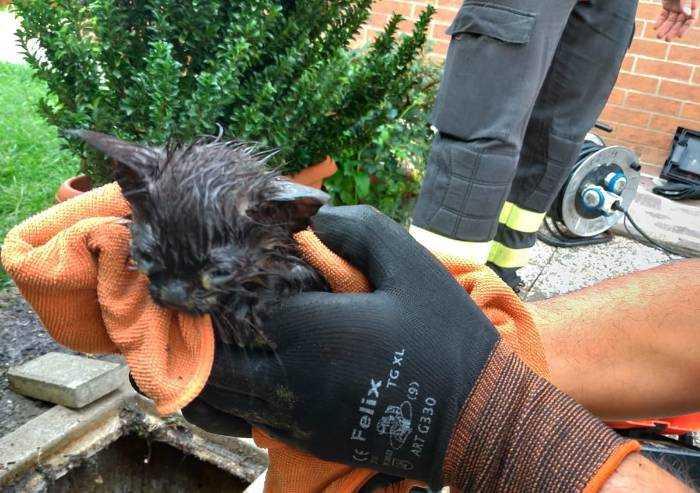 Gattino nel tombino, si mobilitano i Vigili del Fuoco