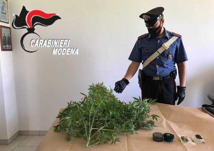 Coltivava cannabis in balcone, nei guai giovane carpigiano