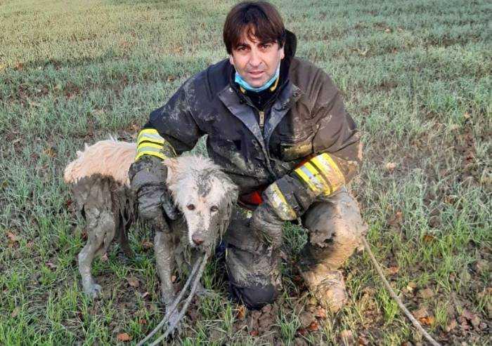 San Felice, vigili del fuoco salvano cane incastrato nel fango