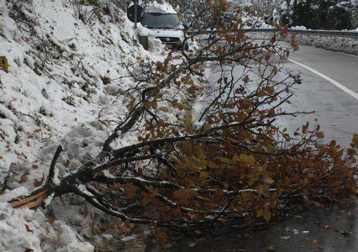 Strade, diversi alberi caduti e ora si teme per la pioggia