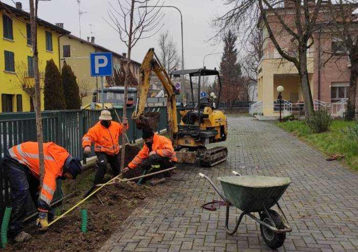 Soliera, messi a dimora 123 nuovi alberi: costo 60mila euro