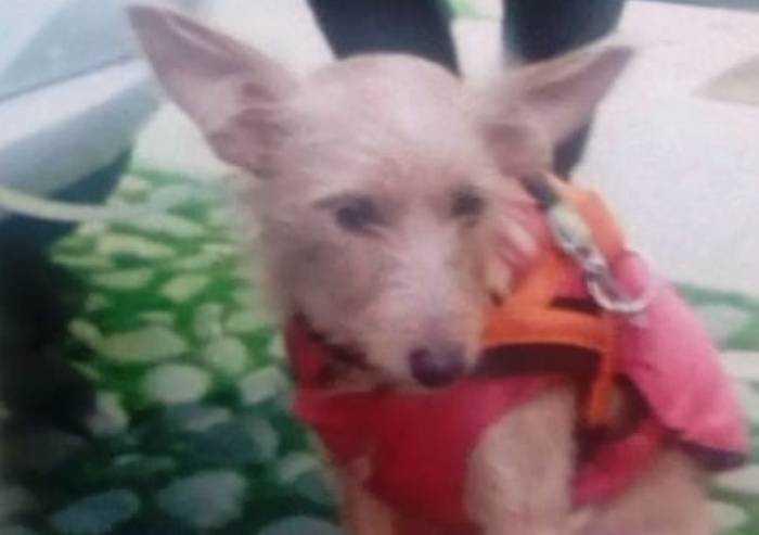 Modena, chiede elemosina con una cagnolina: animale sequestrato
