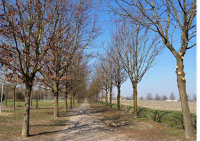 Modena, parco dei Torrazzi: fermateli!