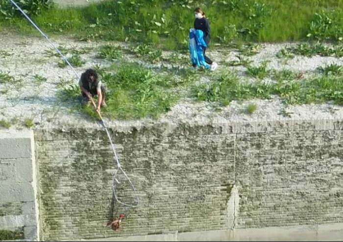 Bomporto, gallina nel Naviglio: salvata dai volontari del Pettirosso