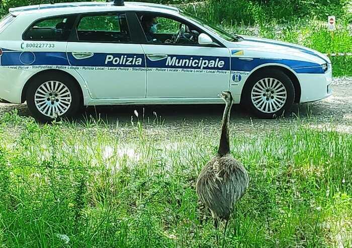Centro Pettirosso, corso per gli agenti della polizia locale