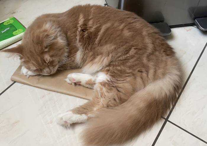 Modena, bando flop: il nuovo gattile è senza gestori