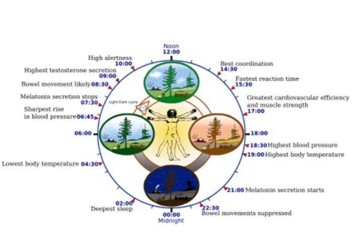 L'orologio della vita: ormoni e metabolismo