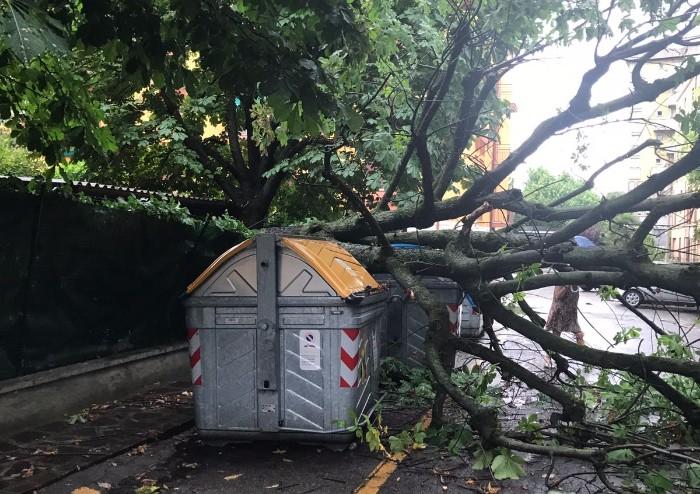 Nubifragio sulla fascia Pedemontana: danni da Savignano a Serramazzoni