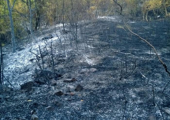 Il giorno dopo l'incendio