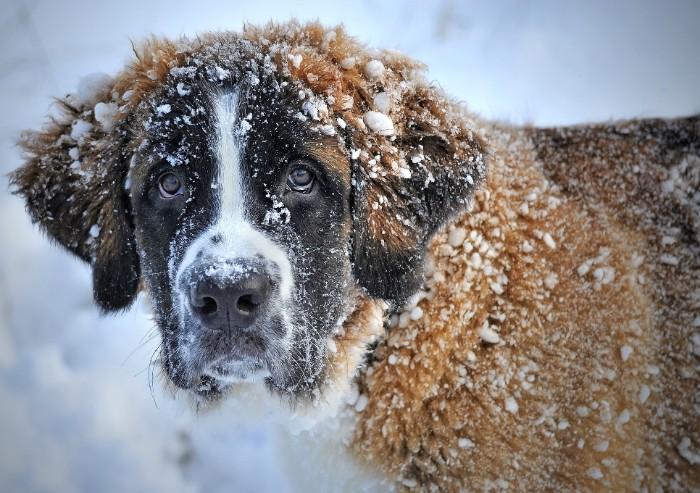 Esposizione internazionale canina: a Modena 200 razze da ammirare