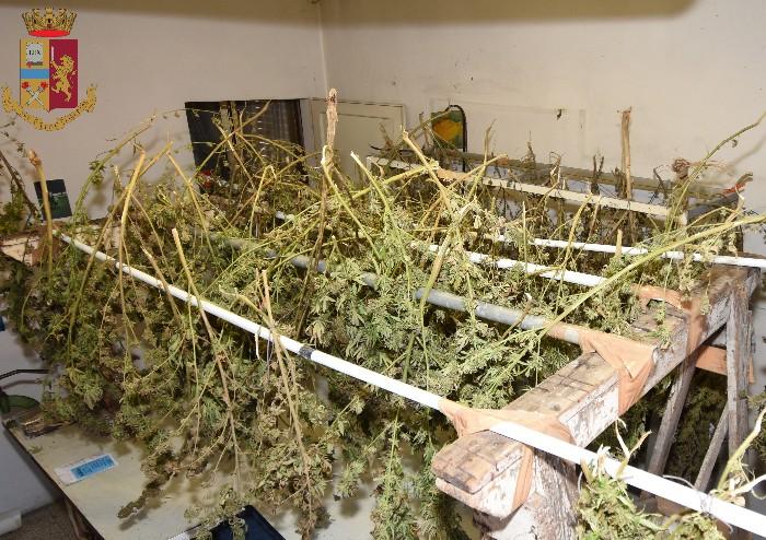 In cortile e in casa piantagione ed essicatoio di cannabis: padre e figlio denunciati