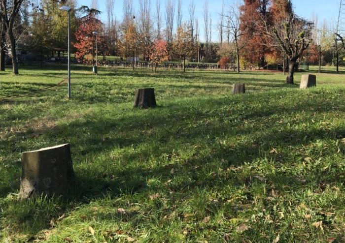 Nella giornata degli alberi il Comune fa strage di alberi